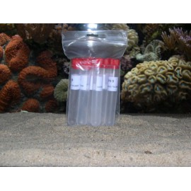 Solution PH 7.00 (10 flacons unidoses)