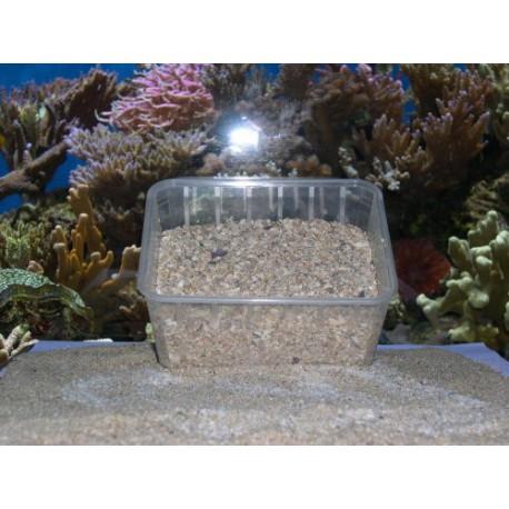 Tridacna/Coquilles d'huitres concassées kilo